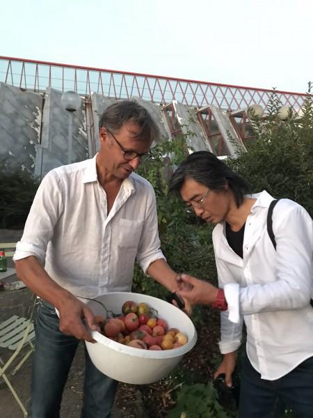 トマトの採り入れ